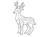 Desenho de Un cervo novo para colorear